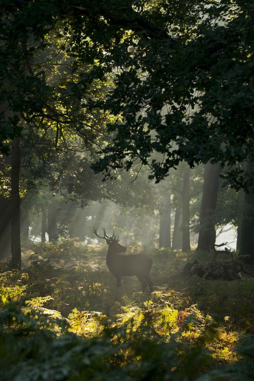 Running in the woods. RICHMOND PARK