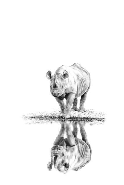 Black and white phtographic image of a black rhino's reflection in water