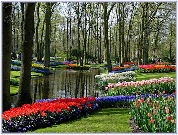 Keukenhof tulip festival netherlands europe 2017 for Amazing flower gardens