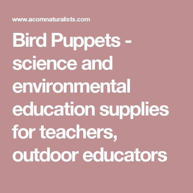 Bird Puppets  - science and environmental education supplies for teachers, outdoor educators