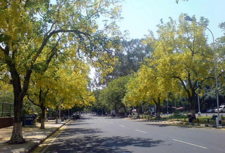 Chandigarh at the advent of Spring.