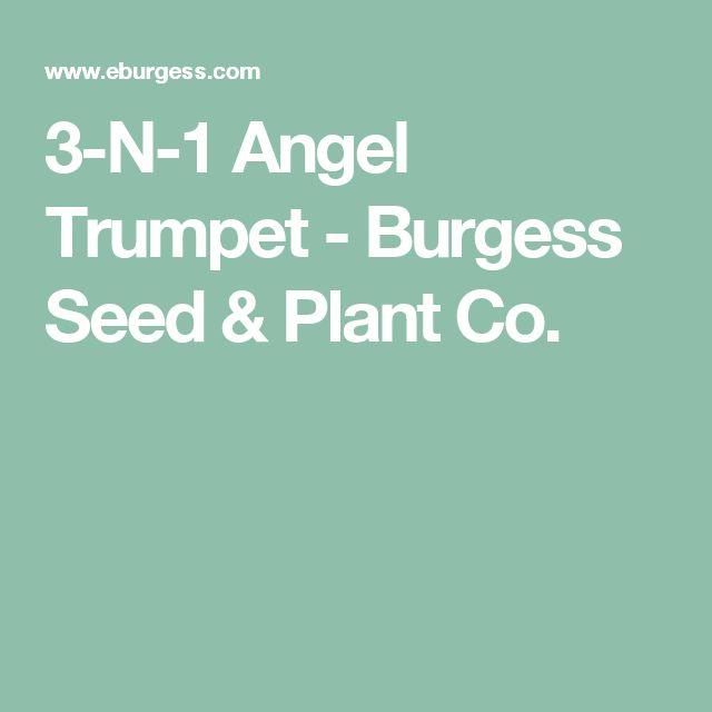 Best 25 Trumpet Music Ideas On Pinterest: 25+ Best Ideas About Angel Trumpet On Pinterest