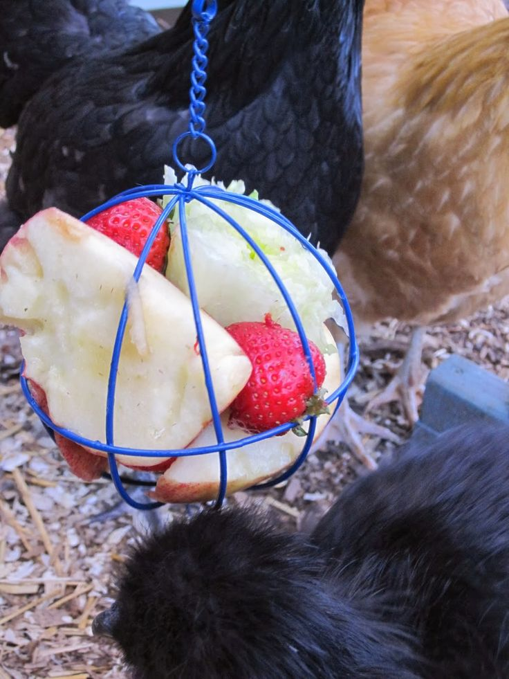 7 Winter Boredom Busters for Backyard Chickens