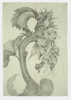 Sunflower I by Sarah Graham - graphite on paper 2008 166 x 116 cm More