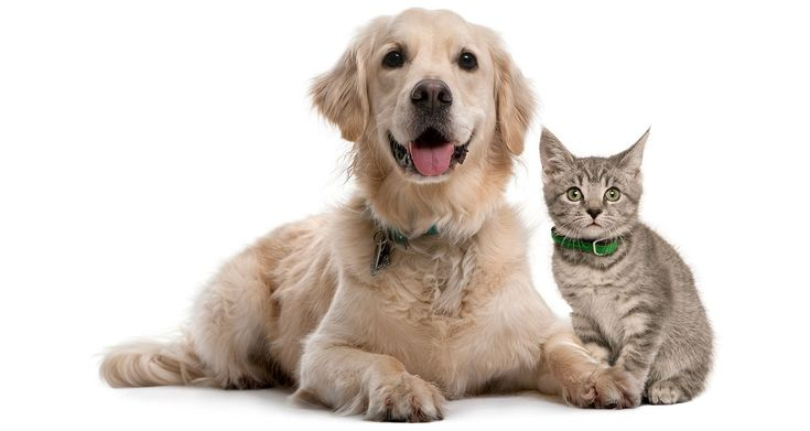 Pet Insurance For Dogs - Easy Quotes, Best Rates Available ...