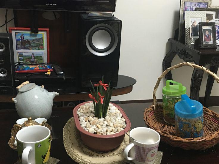 "Sansevieria plant""money plant"""