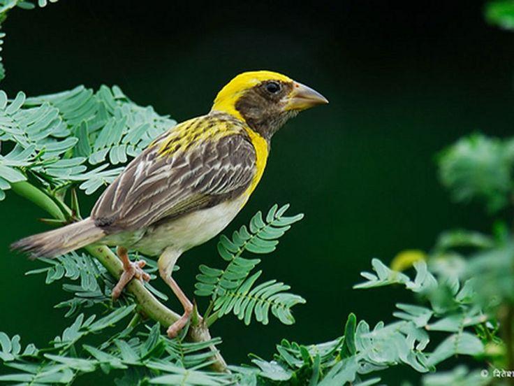 Purna Wildlife Sanctuary - in Gujarat, India