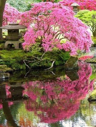Japanese Garden Cherry Blossom Tree I Want To Go See This Place One Day Please Check Out My Websit Japanese Garden Landscape Japanese Garden Japanese Landscape