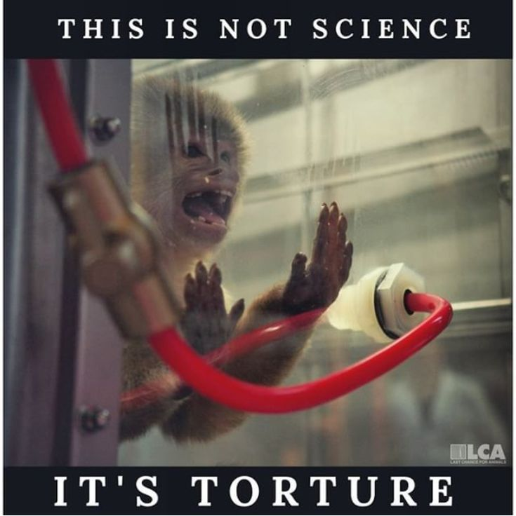 Please look for products that state no animal testing