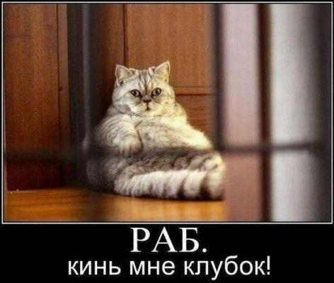 Раб, кинь коту клубок