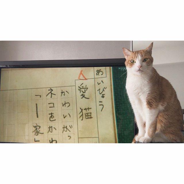 . 今朝は#舟を編む 放送中だよ📚 この映画すきなんよね。 #愛猫 #じんくん🐈 #gingercats #Gfabulous📽