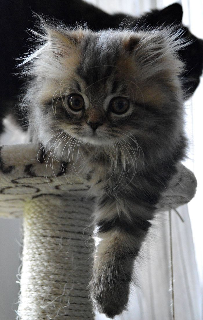 Once in a while, a #cute #kitten sneaks into my heart and onto…