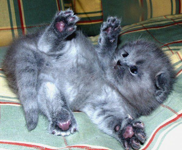 Kitten Adoption   ... Kittens   Funny Pet Wallpapers - Cute pet, funny pet, puppies, kittens
