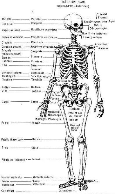 les 64 meilleures images du tableau planches anatomique sur pinterest anatomie humaine le. Black Bedroom Furniture Sets. Home Design Ideas