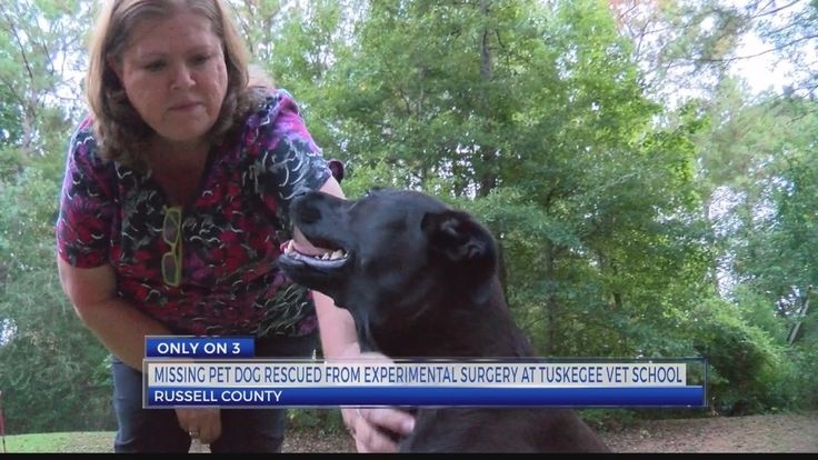 ONLY ON 3 Local family rescues missing dog from