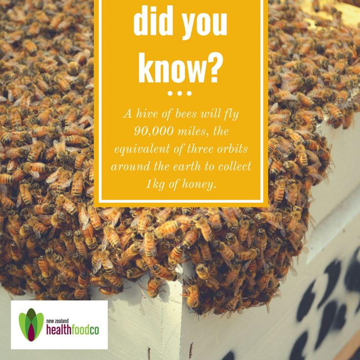 Bees definitely understand the value of teamwork and hardwork to produce something worth while - be at your best too with our 100% New Zealand Manuka Honey, favoured over time for its antibacterial and natural sugar digestive properties. You can't go wrong with our Manuka South Premium Honey Range - we have a taste for the whole family. Have a look in store or online today at http://www.nzhealthfood.com/catalogsearch/result/?q=manuka+south&submit=search #honey #bees #manuka #newzealand #best