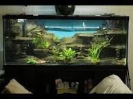 Bildergebnis für aquarium mit schiefer gestalten