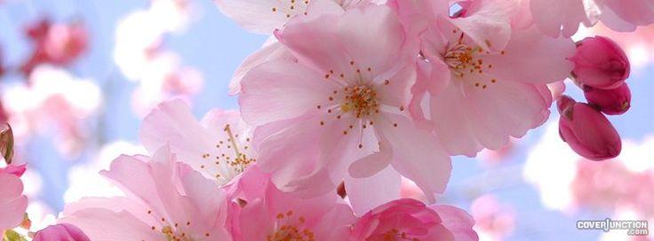 blossom Facebook Cover