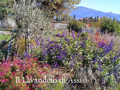 22 best images about creare il proprio giardino con for Piante aromatiche perenni