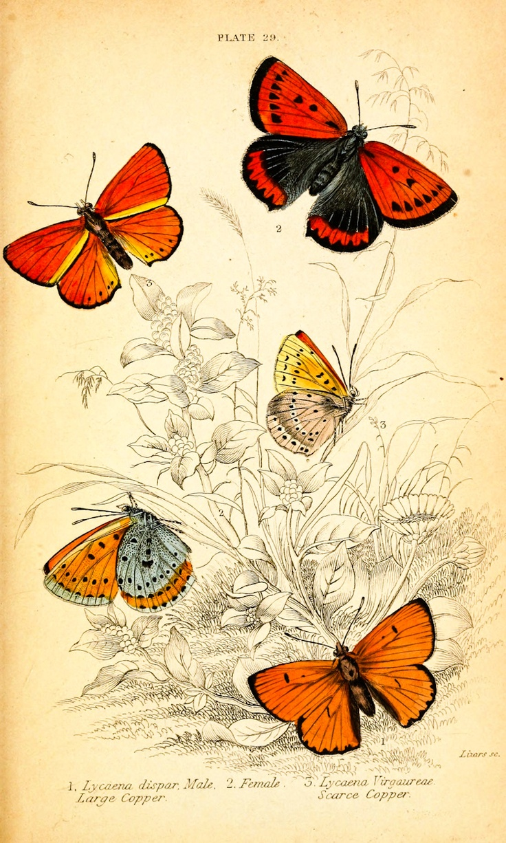 A Few Selected Prints From Vintage Printable A Free Public Domain Site Via House
