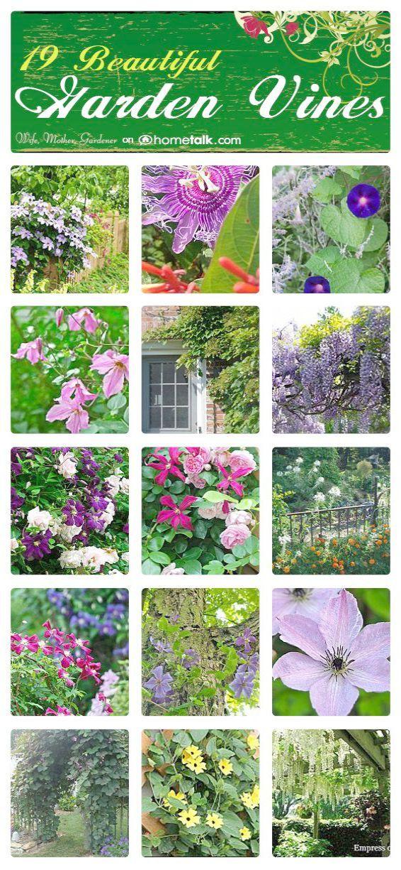 19b0107cc58dd0f0a014c32fcb019b77 - Better Homes And Gardens Landscape Design Software Free