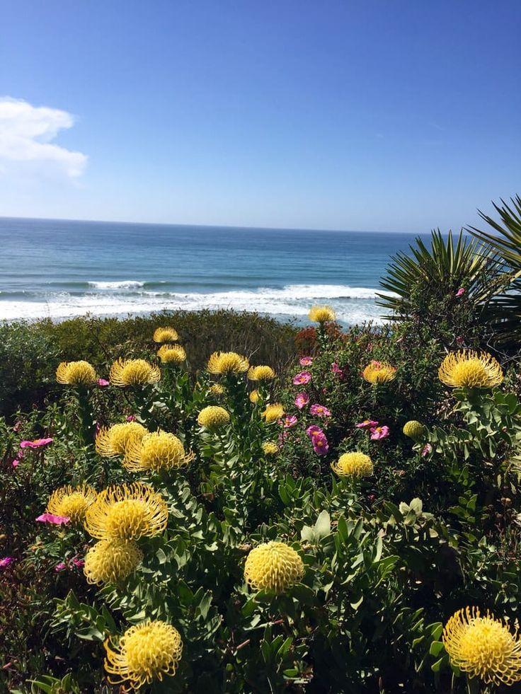 55 Best California 39 S Gold Images On Pinterest California Southern California And Northern
