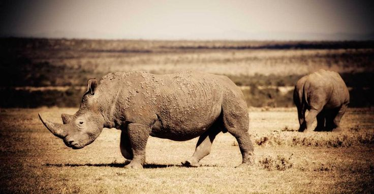 That time we were charged by Rhinos in Kenya