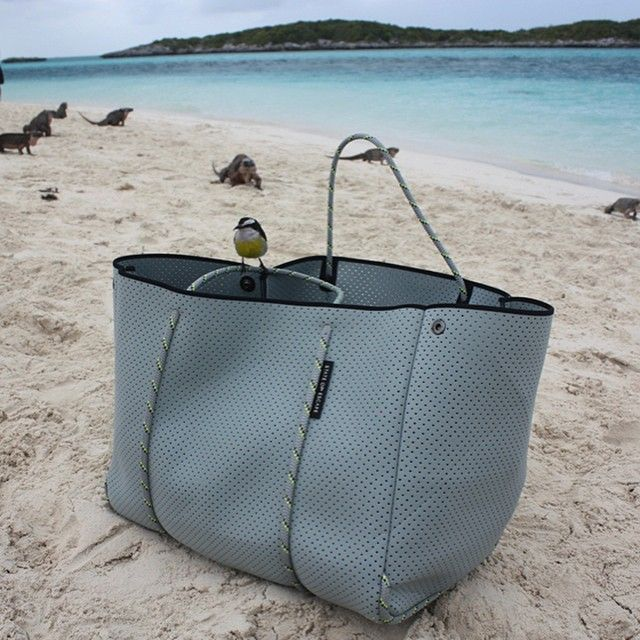 Look at the beautiful little bird that  landed on my bag today. It wasn't frightened of anything - either were the Iguanas for that matter! An amazing part of the world. Allan's Cay, The Exuma Islands Bahamas #stateofescape #bahamas
