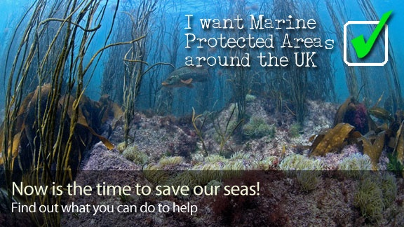 Marine Conservation Society: Protecting Marine Wildlife The Marine Conservation Society, MCS, is the voice for everyone who loves the sea, they work to secure a future for our living seas, and to save our threatened sea life before it is lost forever.