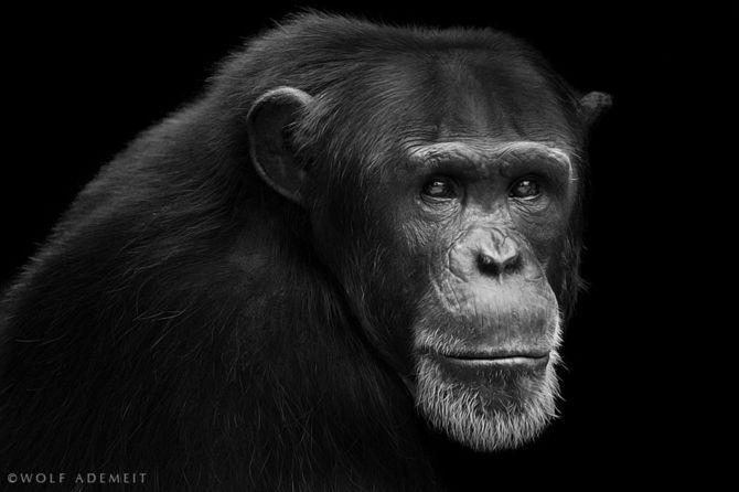 Nádherný fotky zvířat