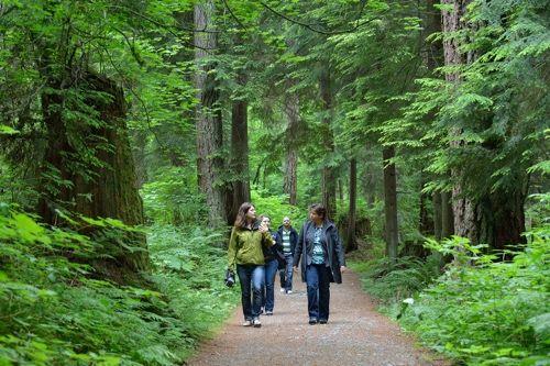 Talaysay Tours: Talking Tree Tours