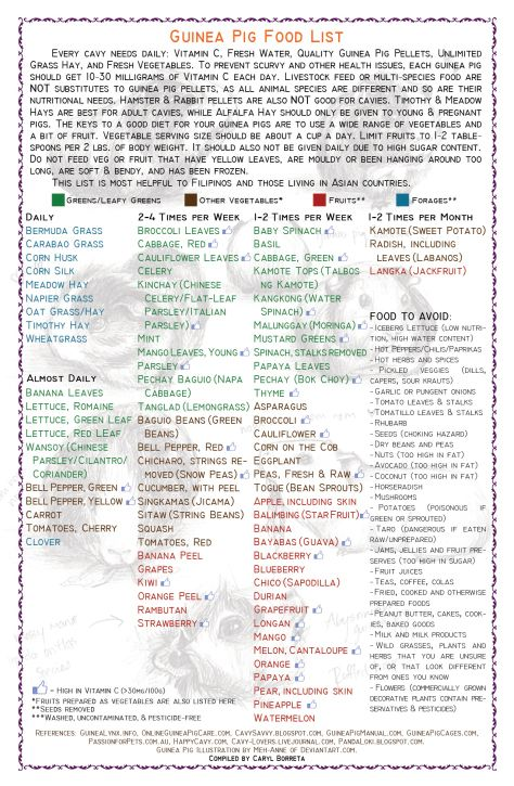 guinea pig food list printable - Bing Images