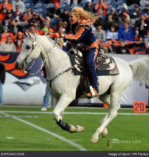 Denver Broncos horse mascot Thunder - 2008 NFL - Oakland Raiders at Denver Broncos (31-10) - November 23, 2008