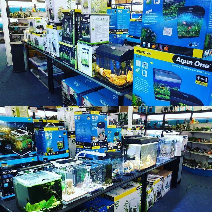 All new tanks plus much more  #sydney #aquarium #australia #aquariumempire #aquariumlife #unique #fresh #coldwater #koi #koifish #pond #marine #coral #greatbarrierreef #oceanlife #tropical #fishtank #aquariumshop by aquariumempire http://ift.tt/1UokkV2