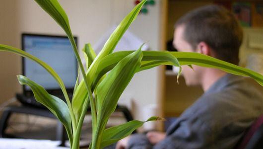 10 cubicle-friendly indoor plants