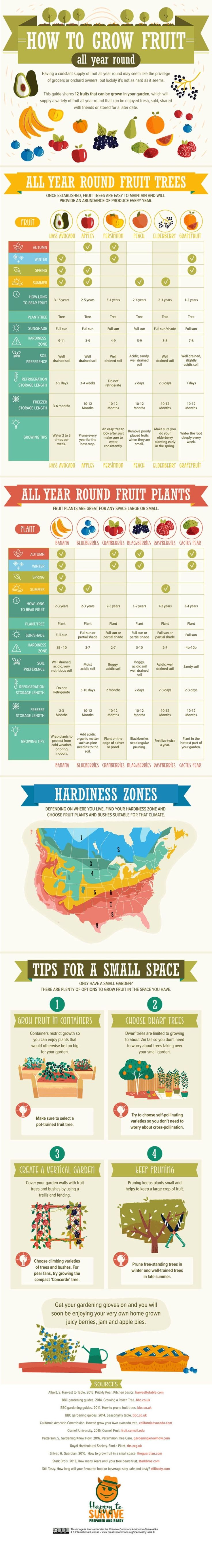 INFOGRAPHIC: Your year-round guide to growing fruit in any space