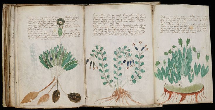 The Voynich Manuscript has never been translated and is thought to be written in a largely unintelligible and unique code. The two languages, Voynich A and Voynich B, are thought to have Polynesian, Latin and Arabic roots, but attempts to understand the text have largely failed. Although hand-written, there are hardly any errors in any of the 230 pages.