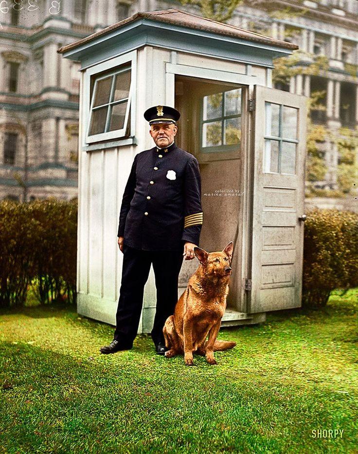후버 대통령의 큰 독일 경찰견 킹 투트