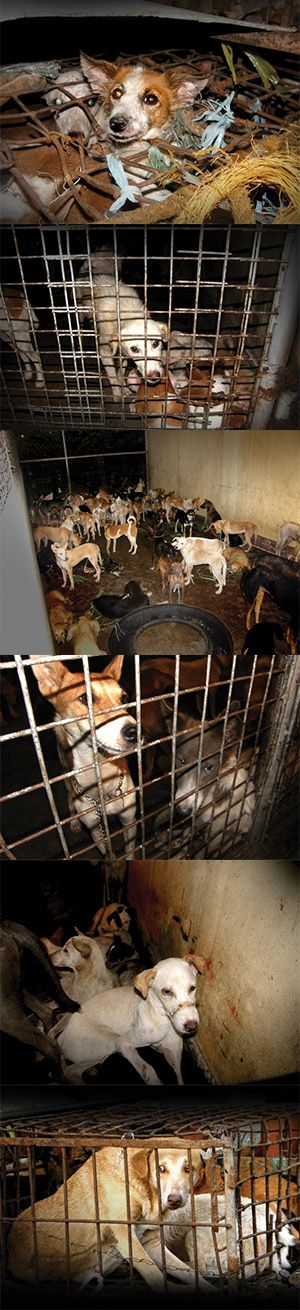 Fight the Dog Meat Trade  http://e-activist.com/ea-action/action?ea.client.id=1736&ea.campaign.id=30597&ea.url.id=363441&forwarded=true