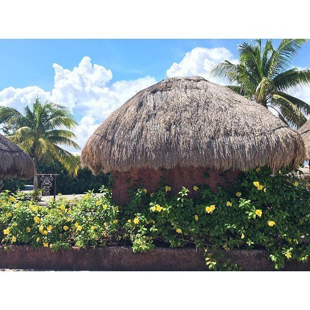 【micco.yy】さんのInstagramをピンしています。 《♡ 絵本に出て来そう! この感じ凄く好き😀💕 #シェルハ#海洋公園#リビエラマヤ#カンクン#メキシコ #海外旅行 #海 #カリブ海#trip#xelha#cancun#mexico》