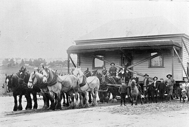 Horse Teams | horse team moving a house from Creswick through Allendale, about ...