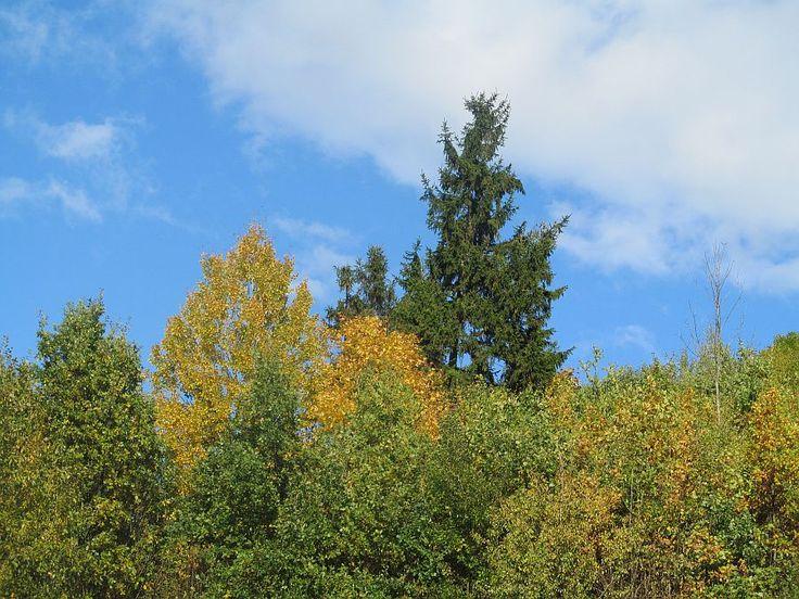 Na szlaku pieszym na Górę Czterech Wiatrów.  www.it.mragowo.pl