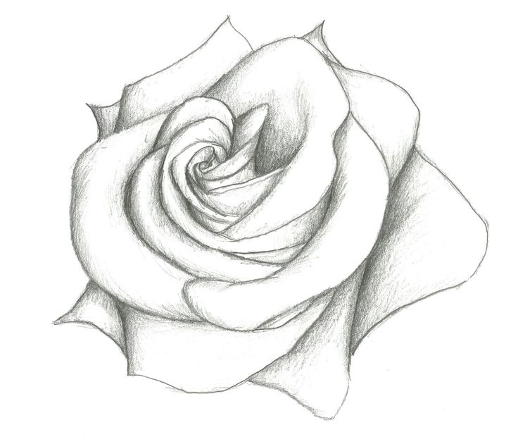 google how to draw a rose