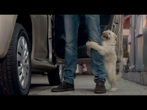 Cell C Dog Ad - Are you tired of being taken advantage of?