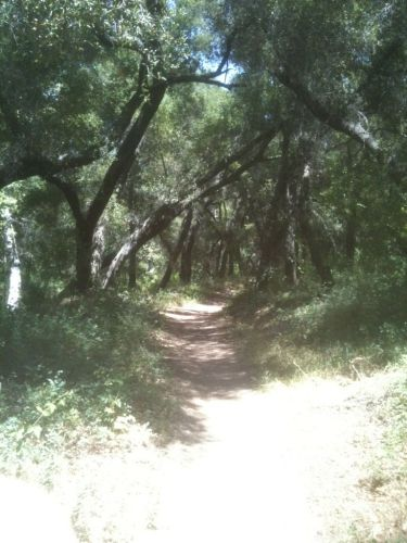 Ventura Best Hikes With Dogs