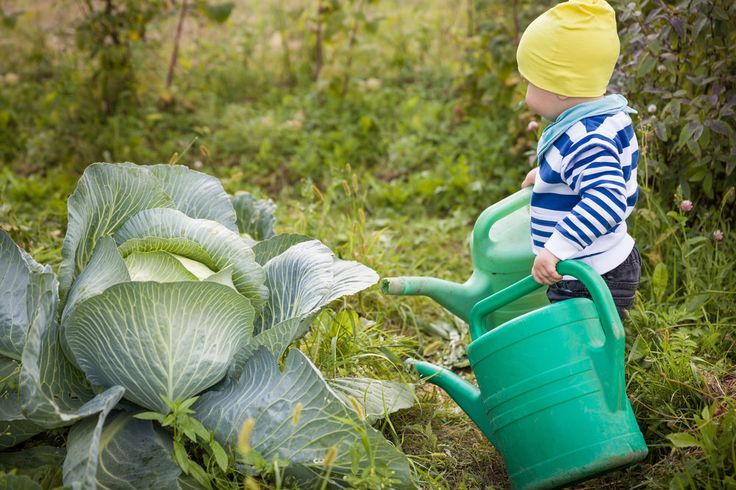 7 Ways to get your Kids excited about Healthy Cooking - Kamo - baby going to work at a vegetable garden