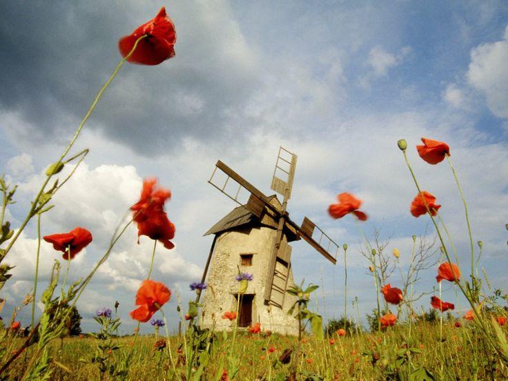 Bert Wallpaper Iphone X Best 50 Spring And Summer Scenes Images On Pinterest