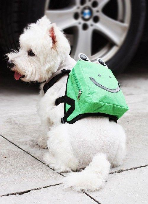 Perro con mochila .Dog wearing a bag. fashion dog