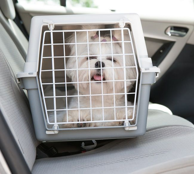 8 Effective Ways To Get More Out Of Animal Transporting services
