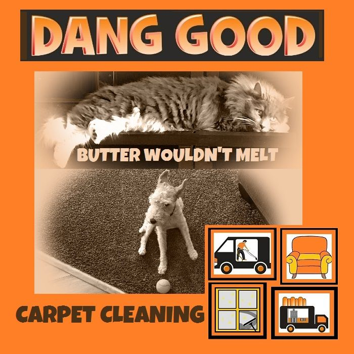 Have your #pets done a dirty deed? Perhaps you need a #carpetcleaning  Check out danggoodclean.com We have some great #deodorizing products.